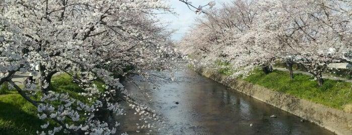 五条川 is one of FAVORITE PLACE.