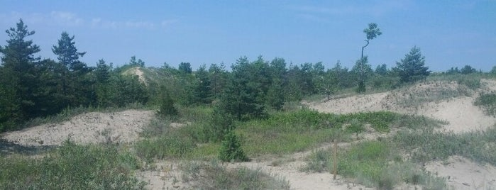 Sandbanks Provincial Park: Dunes is one of Posti salvati di Darryl.