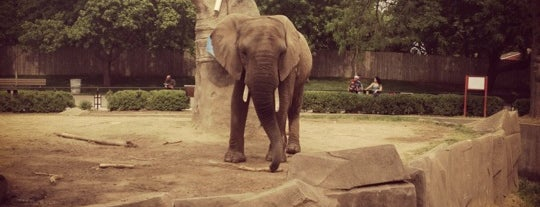 Milwaukee County Zoo is one of Must See Things In Milwaukee.