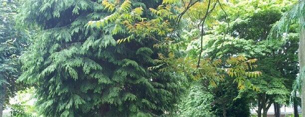Katie Black's Garden is one of Seattle's 400+ Parks [Part 1].