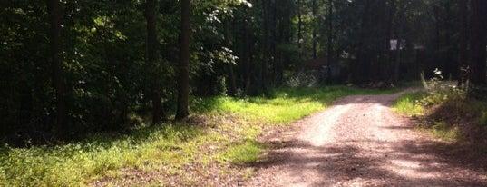 Schenck Memorial Forest is one of RDU Baton - Raleigh Favorites.
