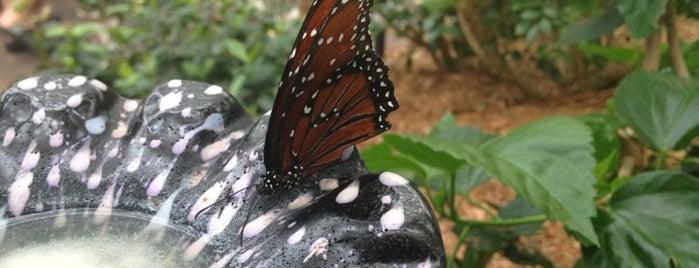 Butterfly Garden is one of สถานที่ที่บันทึกไว้ของ Rachel.