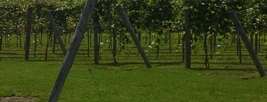 Rushland Ridge Vineyard & Winery is one of Local Wineries/Vineyards.