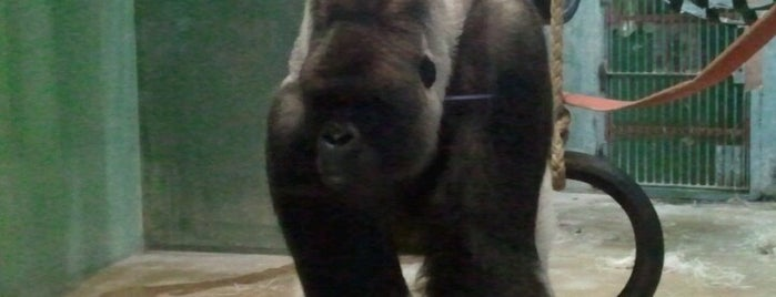 Gorillaverblijf is one of Diergaarde Blijdorp 🇳🇬.