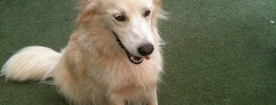 Humane Society of Charlotte Spay / Neuter Clinic is one of Posti che sono piaciuti a Heather.
