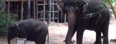 Pattaya Elephant Village is one of (Temp) My Thailand.