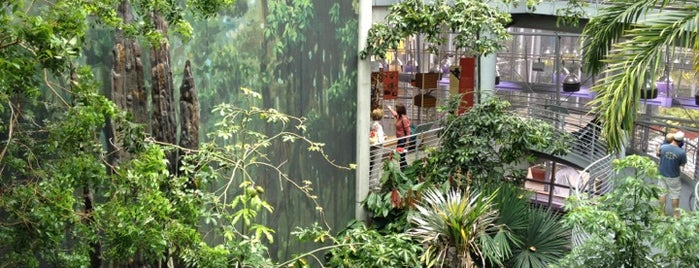 Osher Rainforest is one of San Francisco.