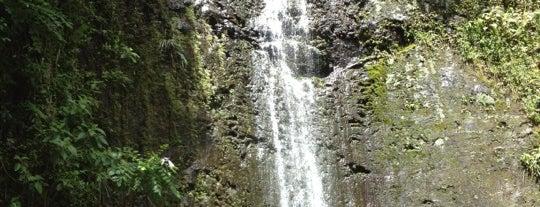 Mānoa Falls is one of Hawaii Trip!.