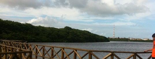 Parque dos Cajueiros is one of Tatiさんの保存済みスポット.