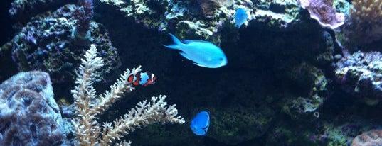 The Aquatic Critter is one of Tempat yang Disukai David.