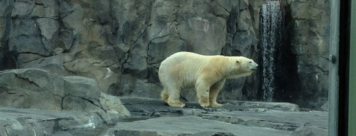 The Alaska Zoo is one of Top Zoos and Aquariums in the US and Canada.