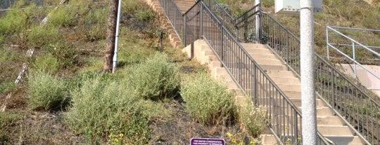 Bluff Park is one of Leo : понравившиеся места.
