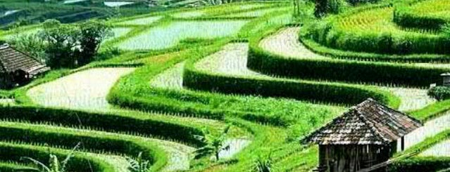 Jatiluwih Rice Terraces is one of путешествия.