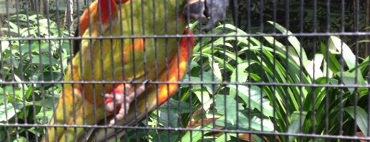 Jurong Bird Park is one of Singapore/シンガポール.