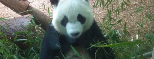 Zoo Atlanta is one of 💚✈️ A t l a n t a ✈️💚.