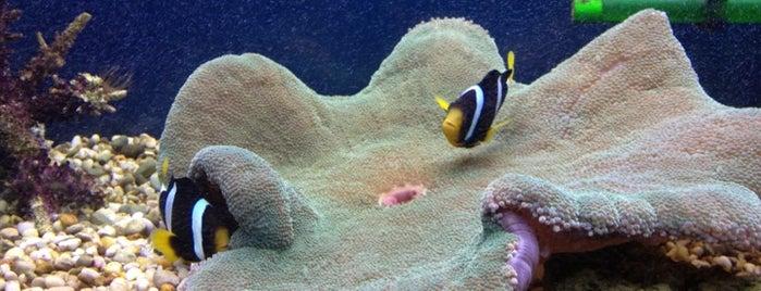 Севастопольский аквариум is one of Locais salvos de Катерина.