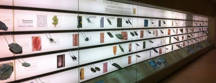 Museo de Paleobotánica. Molino de la Alegría is one of Que visitar en Cordoba.
