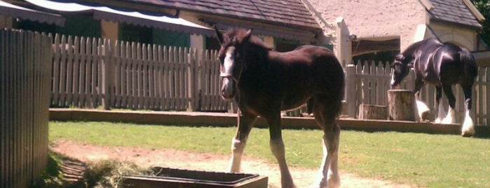 Highland Stables - Busch Gardens is one of Going Traveling!.
