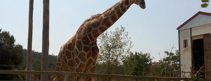 Paphos Zoo is one of Balashov 님이 좋아한 장소.