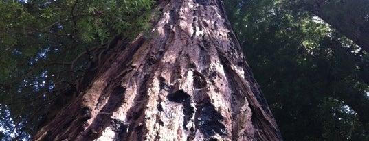 Big Basin Redwoods State Park is one of Kalifornien.