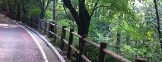 Namsan Park is one of [To-do] Korea.