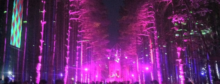 Electric Forest Festival 2013 is one of Bing's Ultimate Music Festival Guide.