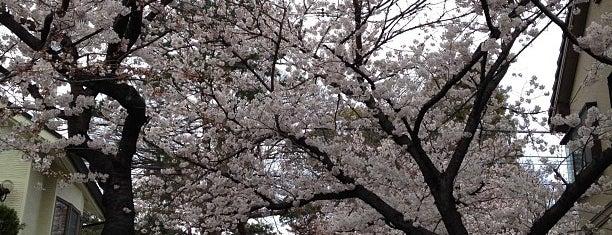 弓弦羽神社 is one of Locais curtidos por Hitoshi.