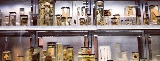 Hunterian Museum is one of London, somewhat....