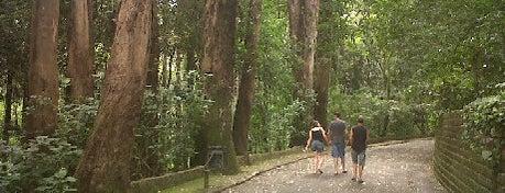 Bosque dos Jequitibás is one of Turismo em Campinas.