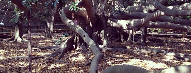 Orto botanico is one of Lugares favoritos de Marek.