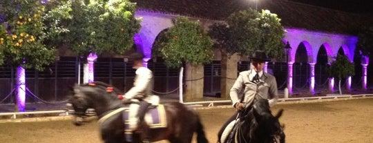Caballerizas Reales is one of Que visitar en Cordoba.