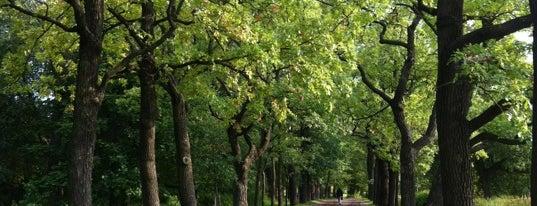 Нижний (Отдельный) парк is one of RUS Saint Petersburg.