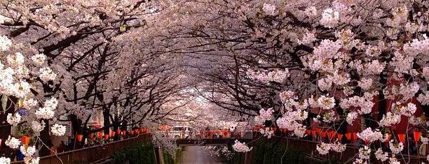 Meguro River is one of JP-Tokyo.