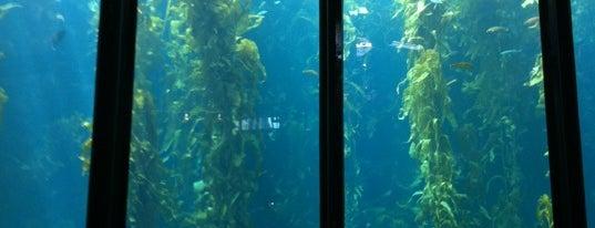 Monterey Bay Aquarium is one of Places to Visit: California Coast.
