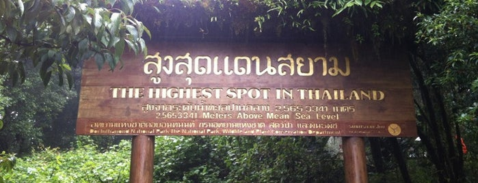 Doi Inthanon is one of Thai Flowers.