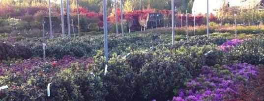 Lurvey Landscape Supply & Garden Center is one of Lugares favoritos de Karlton.