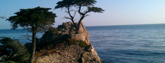 The Lone Cypress is one of SF und Arizona.