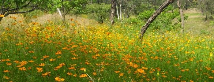Bosque del Centinela is one of Guadalajara, MX.
