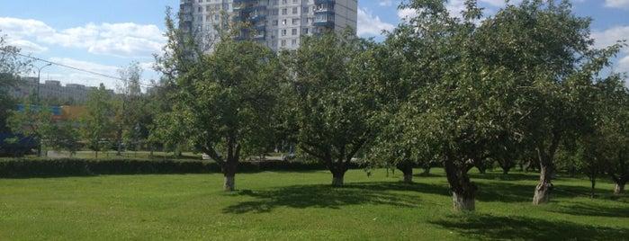 Яблоневый сад is one of Orte, die Евгения gefallen.