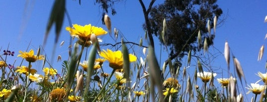 Madrona Marsh Preserve And Nature Center is one of Hiking - LA - South Bay - OC - etc..