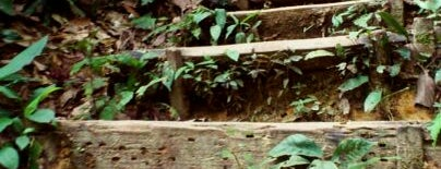 Bukit Gasing (Gasing Hill) is one of Attraction Places to Visit.