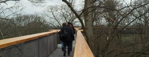 Rhizotron & Xstrata Treetop Walkway is one of Tired of London, Tired of Life (Jul-Dec).