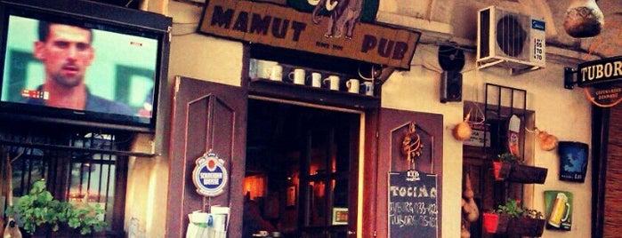 Mamut is one of Novi Sad.