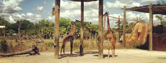 Tampa's Lowry Park Zoo is one of Tampa Attractions.