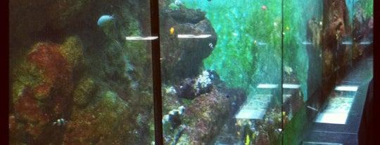 Artis Aquarium is one of Monuments ❌❌❌.