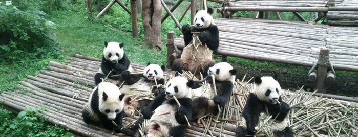 Chengdu Research Base of Giant Panda Breeding is one of 성도.
