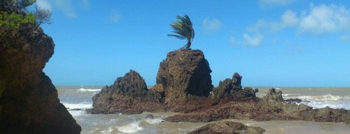 Praia de Tambaba is one of Pontos turísticos.