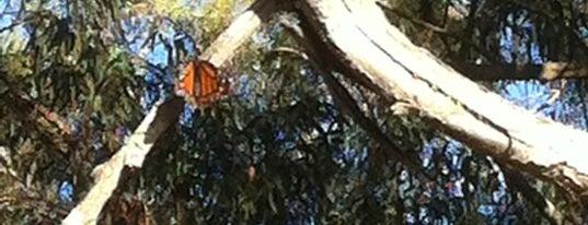 Coronado Butterfly Preserve is one of Santa Barbara.