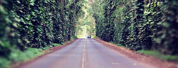 Tunnel Of Trees is one of South Shore Kauai.
