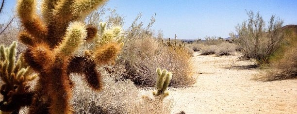 Anza-Borrego Desert State Park is one of San Diego,United States.